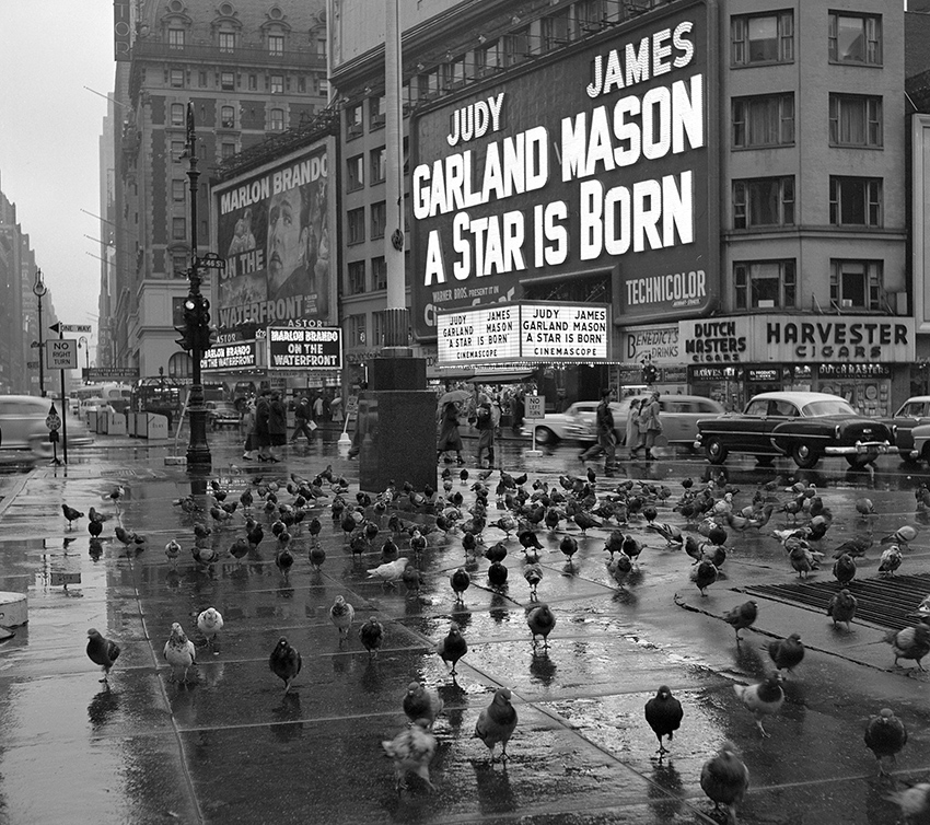"""Pigeons gather in Times Square on a rainy day in 1954 in front of the marquee for """"A Star is Born"""" starring Judy Garland.."""